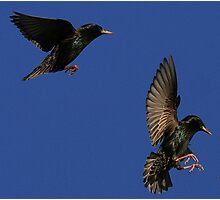 Flight Of The Starlings Photographic Print