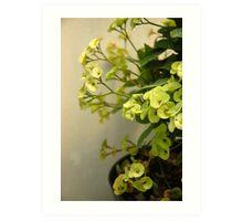 green euphorbia Art Print