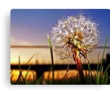 A Dandelion At Sundown. Canvas Print