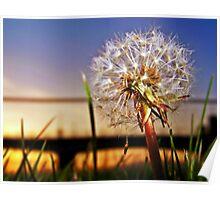 A Dandelion At Sundown. Poster
