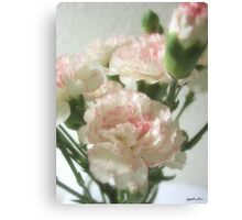 Almost White Carnations 6 Canvas Print