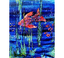 Red Fish Photographic Print
