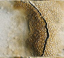 Mont Saint Michel sands boiling and cracking - 2011 by Gwenn Seemel