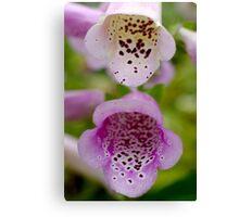 Camelot Lavender Foxglove Flower Canvas Print