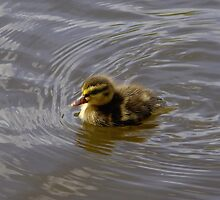 Duckling in a Big River by James Formo