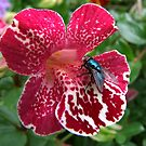 Fly on Mimulus Flower by AnnDixon