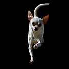 Chihuahua to the Rescue on Black by Corri Gryting Gutzman