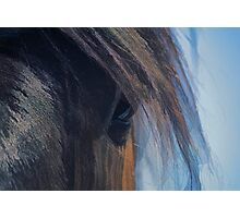 Bay Quarterhorse Named Jack - Portrait Photographic Print