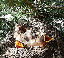 Four in the nest. © by jansnow