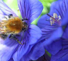 Morning Nectar 3 by missmoneypenny