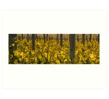 Panarama of Vineyard at Dusk Art Print