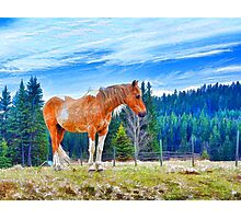 Pinto in the Wind Photographic Print
