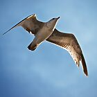 Overflight by Eric Seale