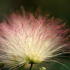 Fiber Optic Mimosa by DebbieCHayes
