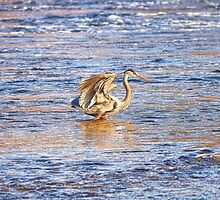 The Golden Great Blue by Skye Ryan-Evans