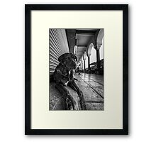 A cute stray dog relaxing Framed Print