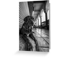 A cute stray dog relaxing Greeting Card