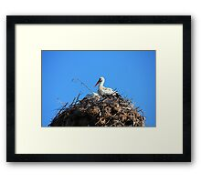 Storks on a blue sky background in Bulgaria Framed Print