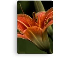 In The Spotlight - Daylilly Canvas Print