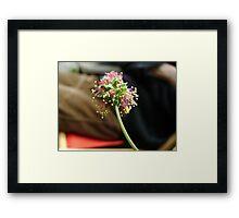 Komachi cluster Framed Print