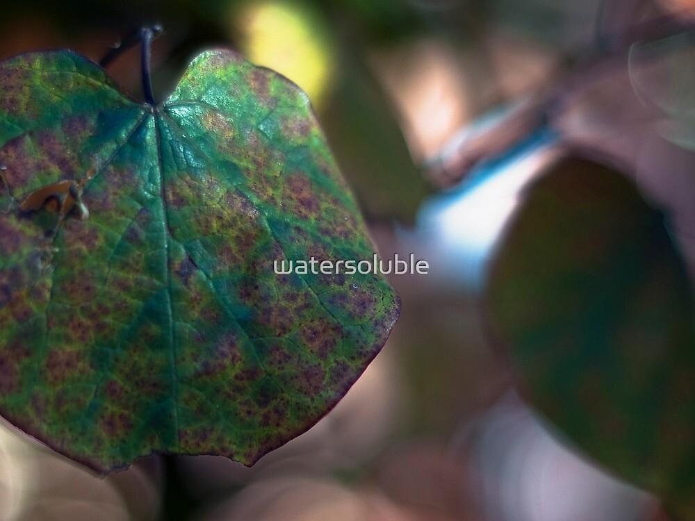 chameleonskin by dennis william gaylor