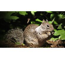 Cute Squirrel Photo and Cell Phone Case Photographic Print