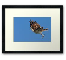 A Leap Above the Ocean Framed Print