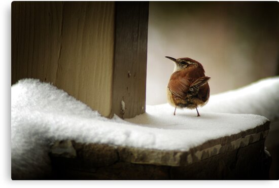 Snow Bird by Kaeldra
