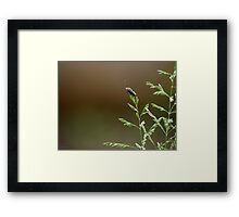 Lightning bug Framed Print