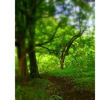 Path through paradise Photographic Print