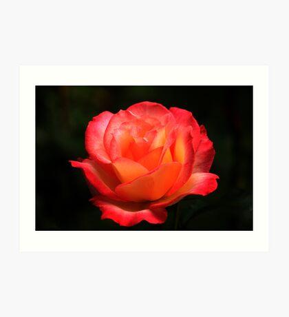 Not A Second Hand Rose Art Print