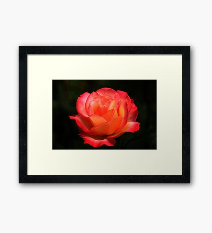 Not A Second Hand Rose Framed Print