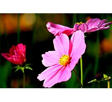 Pink and Yellow Cosmo Photographic Print