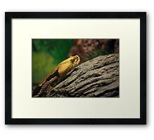 Timber Rattlesnake Framed Print