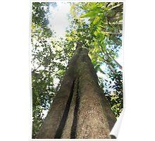 Buderim Rainforest, Sunshine Coast Poster
