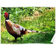 Pleasant Pheasant Poster