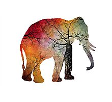 Elephant Tree Soul Photographic Print