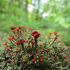 Moss, with tiny red flowers by ChuckBuckner