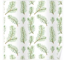 Watercolor pine branches pattern Poster