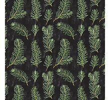 Watercolor pine branches pattern on black background Photographic Print