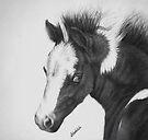 Blue Eyed Paint Foal by Margaret Stockdale