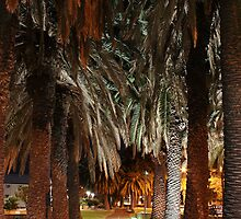Under the Palms by Stephen Horton