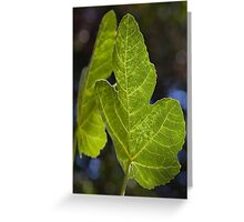 Green leaves of Summer Greeting Card