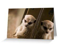 Meerkat Refection Greeting Card
