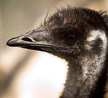 Emu by Laura Mazar
