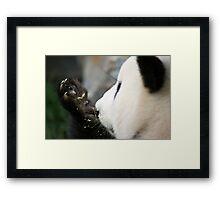 Funi - Adelaide Zoo Framed Print