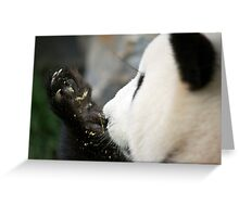 Funi - Adelaide Zoo Greeting Card