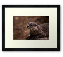 Otter Framed Print
