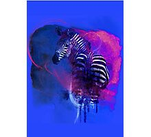 Zebra Ink Photographic Print