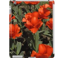 Cleveland Greenhouse 46 iPad Case/Skin